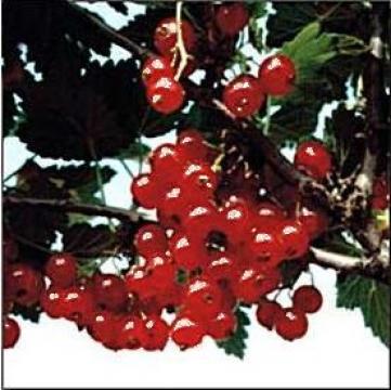 Plan de afaceri pentru culturi de arbusti fructiferi de la Duplicom Grup Srl.