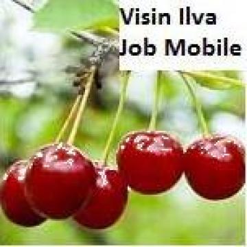 Puieti de visin de la Pomi Fructiferi, Arbusti, Vita De Vie