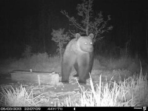 Organizare vanatoare urs de la Cabana 3 Stejari