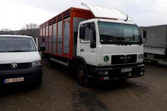 Transport animale vii de la S.c. Muntenia Agrovit Pitesti